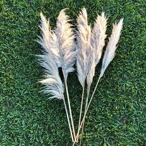 5 pampas grass stems